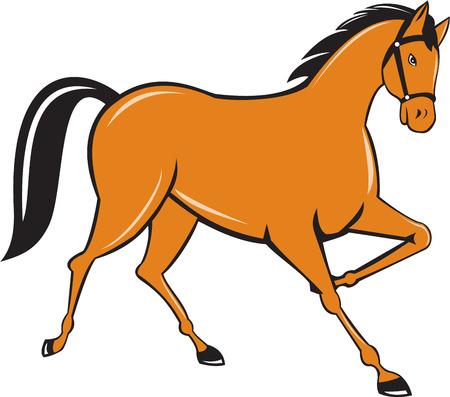 trotando: Ilustraci�n de caballo a medio galope al trote, visto desde el conjunto de lado en el fondo blanco aislado hecho en estilo de dibujos animados.