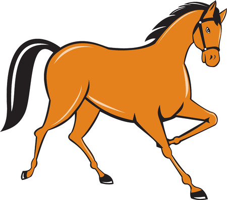 Illustration of horse cantering trotting viewed from the side set on isolated white background done in cartoon style.