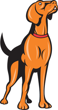 spaniel: Illustration of a cocker spaniel golden dog retriever dog standing looking up set on isolated white background done in cartoon style.