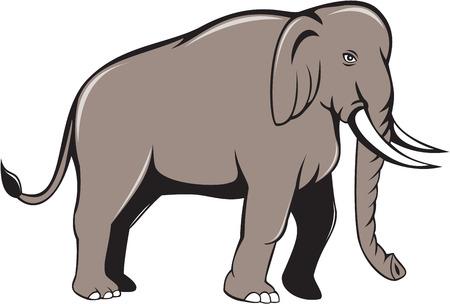 indian elephant: Ilustraci�n de un elefante indio con colmillos caminar visto desde el lado en el fondo blanco aislado hecho en estilo de dibujos animados. Vectores