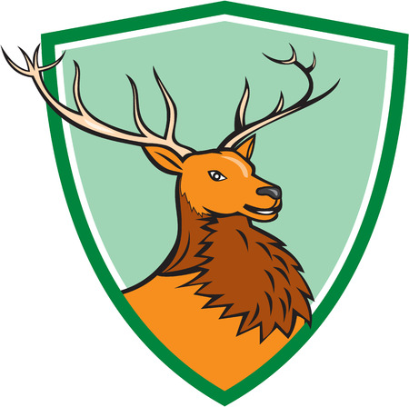 buck: Illustration of a red stag deer buck head facing side set inside shield crest on isolated background done in cartoon style.