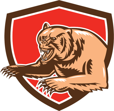 growling: Illustration of a grizzly bear standing angry growling set inside shield crest on isolated background done in retro style.