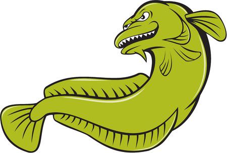 lota: Ilustraci�n de un burbott enojado, Gadiformes (de bacalao similares) peces de agua dulce, visto desde un �ngulo bajo en el fondo aislado hecho en estilo de dibujos animados.