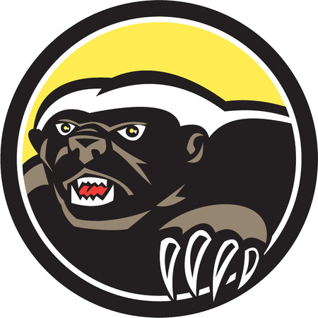 known: Illustration of a honey badger (Mellivora capensis) with claws also known as ratel head facing side on isolated background set inside circle done in retro style.