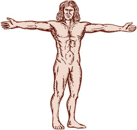 uomo vitruviano: Acquaforte illustrazione incisione stile mano dell'uomo vitruviano, con braccia aperte verso il lato fronte anteriore impostato su sfondo bianco.