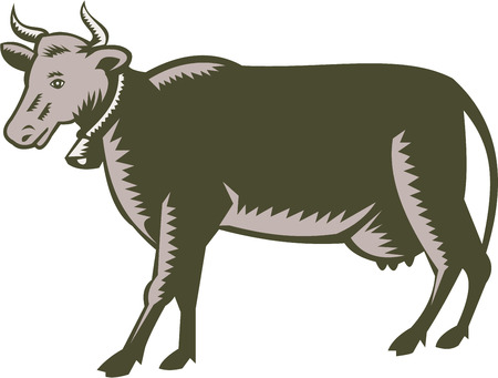 cow bells: Illustration of a dairy cow bull viewed from the side set on isolated white background done in retro woodcut style. Illustration