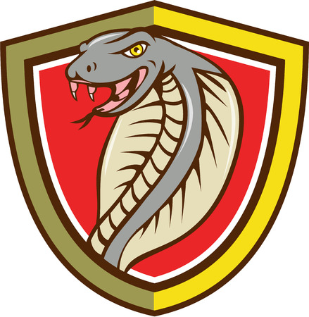 tongue out: Illustration of a cobra viper snake serpent head with tongue out attacking set inside shield crest on isolated background done in cartoon style.