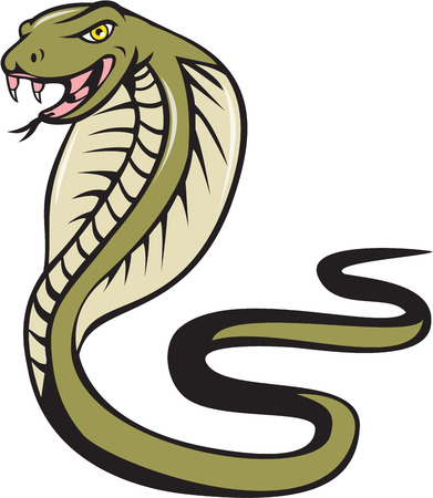 tongue out: Illustration of a cobra viper snake serpent with tongue out attacking viewed from the side set on isolated white background done in cartoon style. Illustration