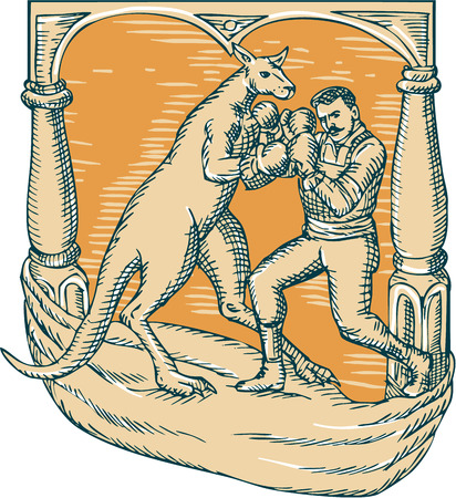 boomers: Etching engraving handmade style illustration of a kangaroo with boxing gloves boxing man set on a stage.