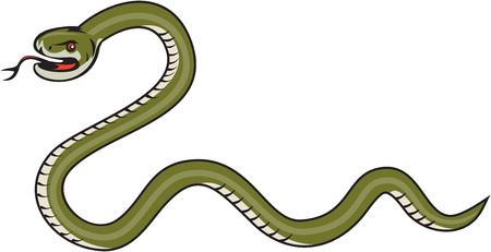 rattle snake: Illustration of a serpent snake viper coiling viewed from the side set on isolated white background done in cartoon style.