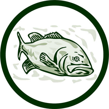 front side: Illustration of a largemouth bass fish facing front side set inside circle done in cartoon style on isolated background.