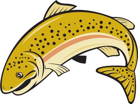 rainbow trout: Illustration of a rainbow trout fish jumping viewed from the side set on isolated white background done in cartoon style.