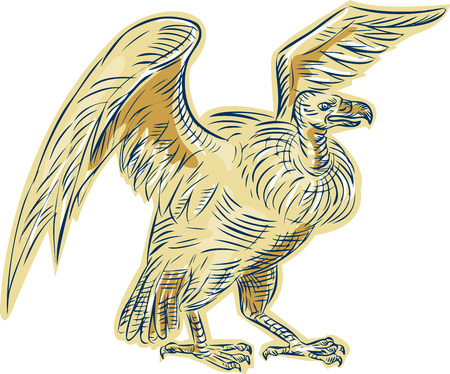 condor: Etching engraving handmade style illustration of a vulture buzzard condor standing viewed from side on isolated white background done in retro style.