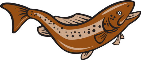 rainbow trout: Illustration of a brown trout rainbow spotted fish Illustration