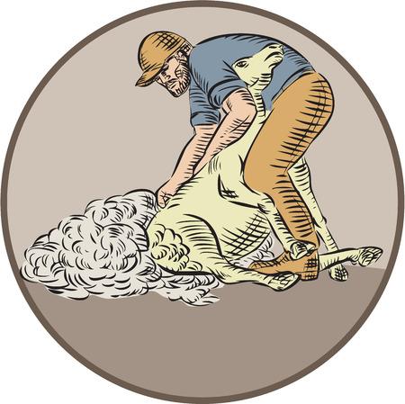 sheer: Illustration of a farmworker