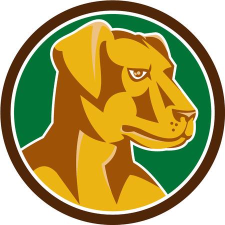 labrador: Illustration of a labrador retriever Illustration