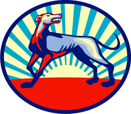 greyhound: Illustration of an angry greyhound dog with mouth open looking up viewed from the side set inside oblong oval shape with sunburst in the background done in retro style. Illustration