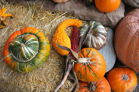 crop harvest: Photo of pumpkin winter squash corn maize crop harvest displayed in garden on top of hay bale with flower pot plants.