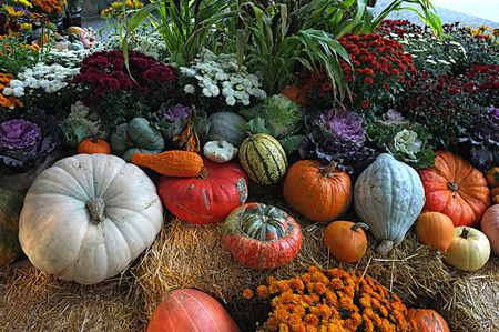 flowers garden: Photo of pumpkin winter squash crop harvest displayed in garden on top of hay bale with flower pot plants.