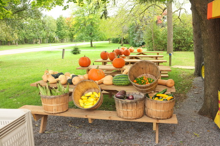 stocked: Photo of a farmers market stall with farm produce on display like pumpkin, squash, melon, eggplant, corn stocked on benches, barrels and crates.