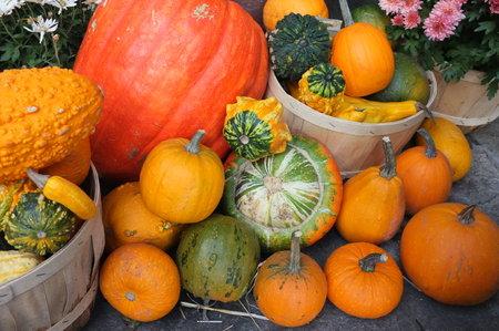 crop harvest: Photo of pumpkin winter squash crop harvest displayed in garden in baskets with flower pot plants.