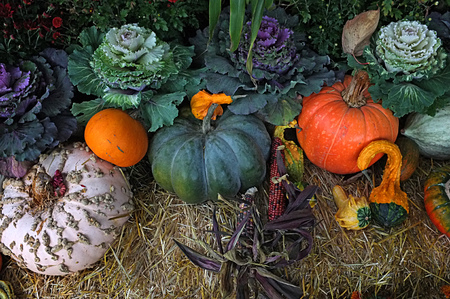 crop harvest: Photo of Indian corn, pumpkin winter squash crop harvest displayed in garden on top of hay bale with flower pot plants.
