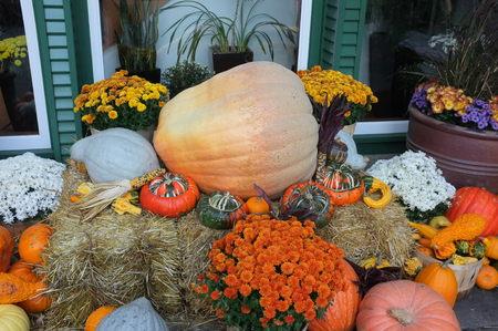 crop harvest: Photo of pumpkin winter squash crop harvest displayed in garden on top of hay bale with flower pot plants.