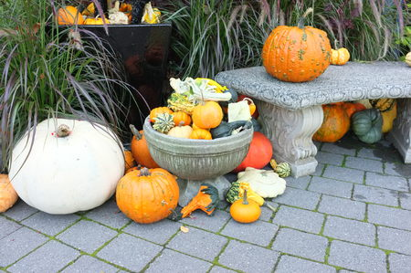 crop harvest: Photo of Indian corn, pumpkin winter squash crop harvest displayed in garden path with flower pot plants.