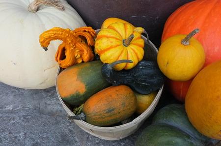 crop harvest: Photo of pumpkin winter squash crop harvest displayed in garden in baskets.