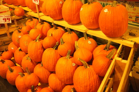 crop harvest: Photo of a pile of pumpkin winter squash crop harvest. Stock Photo