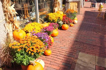 crop harvest: Photo of pumpkin winter squash crop harvest displayed on the street pavement cobblestone brick sidewalk.