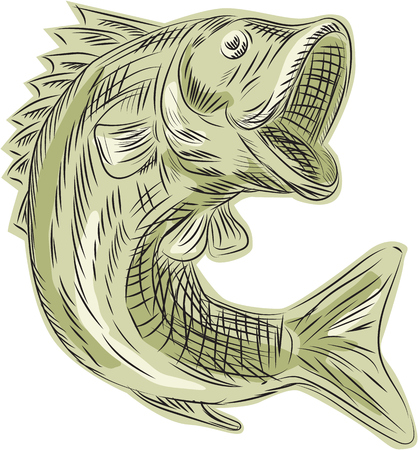 largemouth bass: Etching engraving handmade style illustration of a largemouth bass fish viewed from the side set on isolated white background.