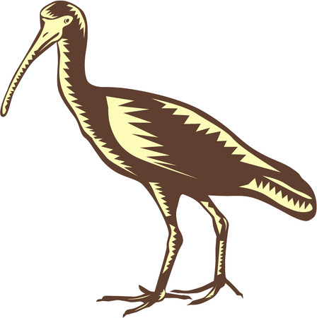 heron: Illustration of a egret heron crane viewed from the side set on isolated background done in retro woodcut style.