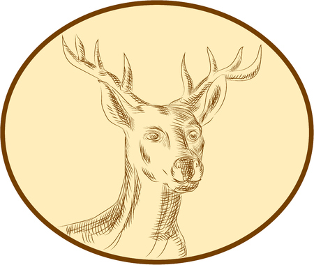 buck: Etching engraving handmade style illustration of a red stag deer buck head viewed from front set inside circle on isolated background. Illustration