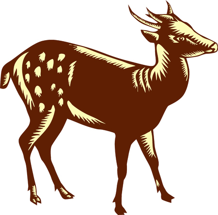 spotted: Illustration of the Visayan spotted deer (Rusa alfredi), also known as the Philippine spotted deer standing viewed from the side set on isolated white background done in retro woodcut style. Illustration