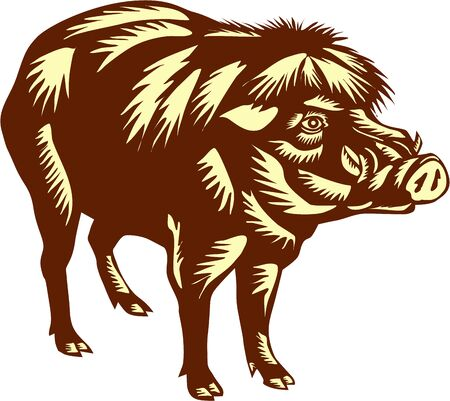 woodblock: Illustration of the Philippine warty pig or Sus philippensis standing viewed from the side on isolated white background done in retro woodcut style.