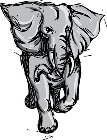rampage: Drawing sketch style illustration of an african elephant rampaging viewed from front on isolated white background.