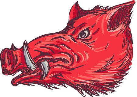 jabali: Gráfico de la ilustración del estilo del bosquejo de una cabeza razorback jabalí cerdo salvaje se ve desde el lado de conjunto sobre fondo blanco aislado. Vectores