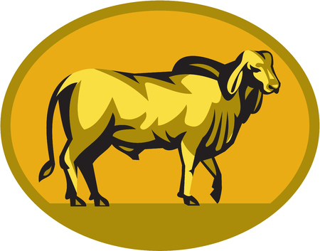Illustration of a brahman bull looking front viewed from the side set inside oval shape on isolated background done in retro style.