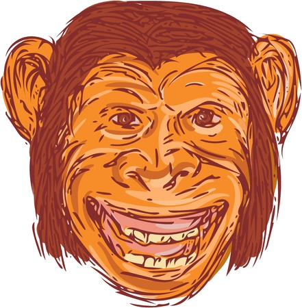 scratch board: Drawing sketch style illustration of chimpanzee head smiling facing front set on isolated white background.