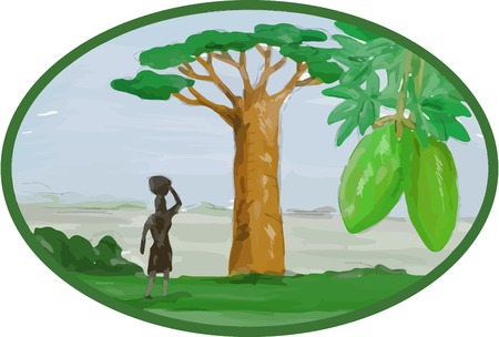 baobab tree: Watercolor style illustration of the Baobab tree and fruit  that grows in low-lying areas in Africa and Australia and woman with basket on head set inside oval.