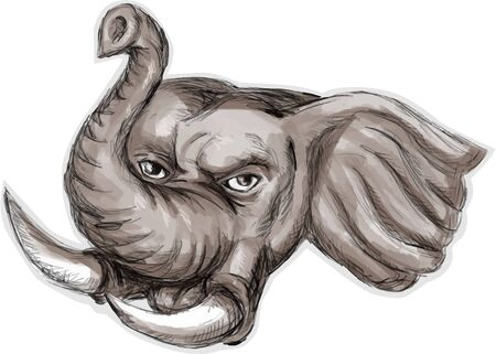 tusk: Watercolor style illustration of an african elephant head with tusk set on isolated white background viewed from front.