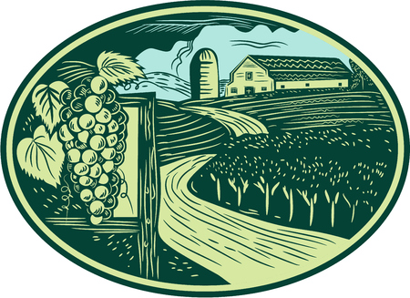 wineries: Illustration of a bunch of grapes on vine with leaves with winding road in vineyard or winery and barn farmhouse in background set inside oval shape done in retro woodcut style.