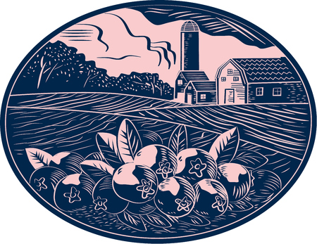 vaccinium macrocarpon: Illustration of a cranberry fruit farm with farmhouse barn and silo in the background done in retro woodcut style.