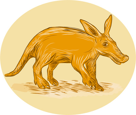 nocturnal: Drawing sketch style illustration of an aardvark or African ant bear or Cape anteater, a medium-sized, burrowing nocturnal mammal native to Africa viewed from side set inside circle viewed from the side. Illustration