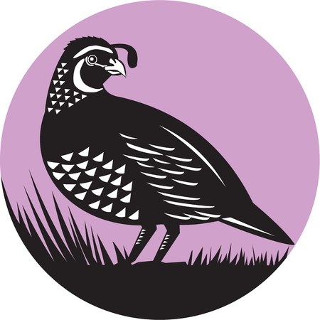 CODORNIZ: Ilustración de un pájaro valle de codorniz de California que mira al conjunto de lado dentro del círculo hecho en estilo retro.