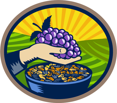linocut: Illustration of a hand holding grapes with raisins in a bowl set inside oval shape with sunburst in the background done in retro woodcut style.
