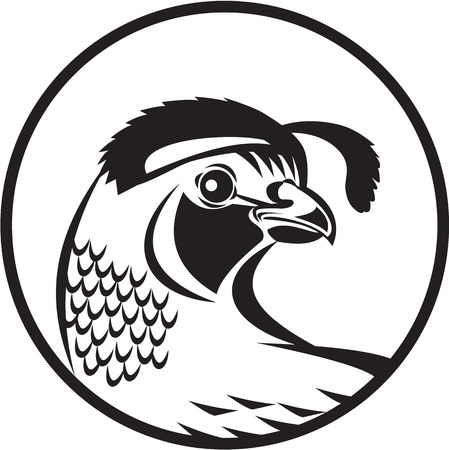 Black and white illustration of a California valley quail head looking to side set inside circle done in retro style.