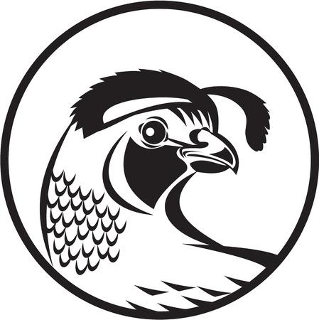 Zwart-wit afbeelding van een Californische dal kwartel hoofd op zoek naar kant set binnen cirkel gedaan in retro stijl.