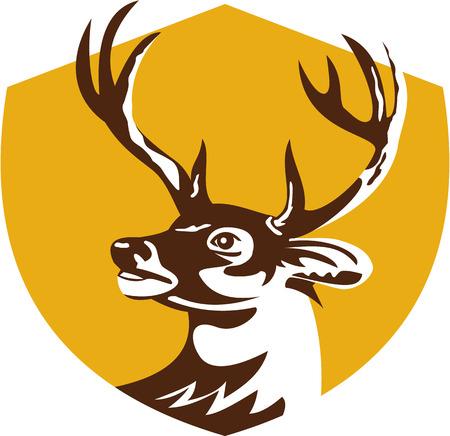 venado cola blanca: Ilustración de una cabeza de ciervo de cola blanca buck mirando al conjunto de lado dentro de la cresta escudo hecho en estilo retro.